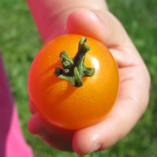 rubys-tomato3