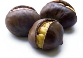 chestnut-lr1