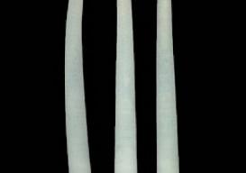 3-molluscs