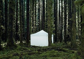 tent space in trees
