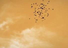 Arcade Fire Birds