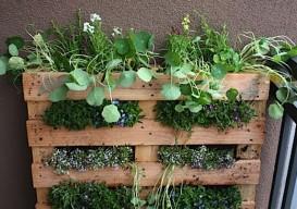 pallet garden 1