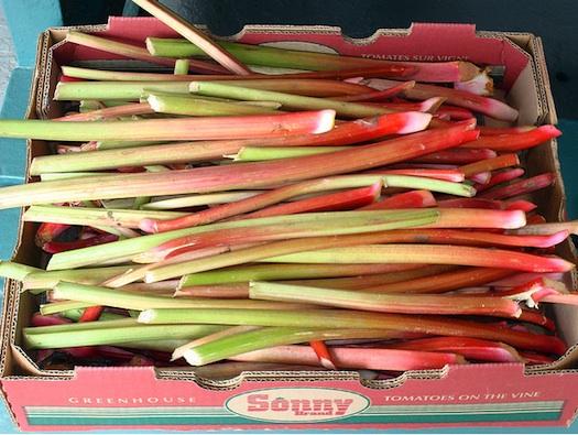raw rhubarb in farmer's market