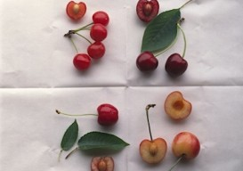 Maria Robledo cherries via Trunk archive