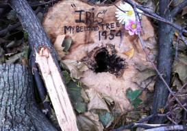 felled tree with message Harlem Ny