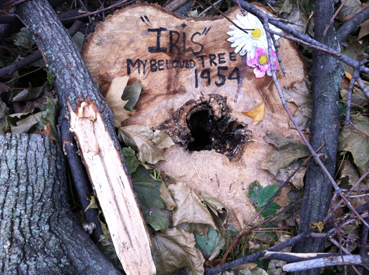 felled tree with message Harlem Ny