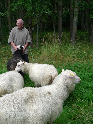 Bovik Farm Sebastian Nurmi with sheep