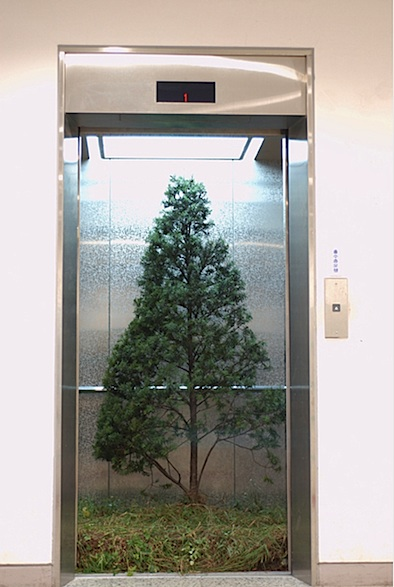 MYEONGBEOM KIM elevator with tree