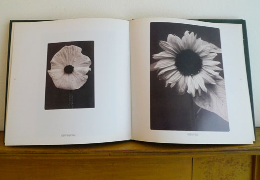 from Plant Kingdoms The Photographs of Charles Jones