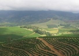 coffee plantation brazil