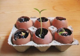eggshell seed starter instructables