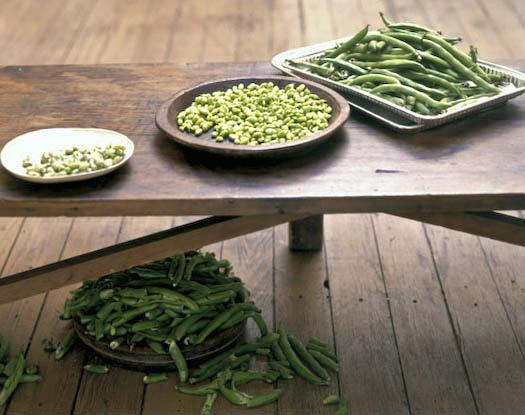 fava beans being shucked Sally Schneider