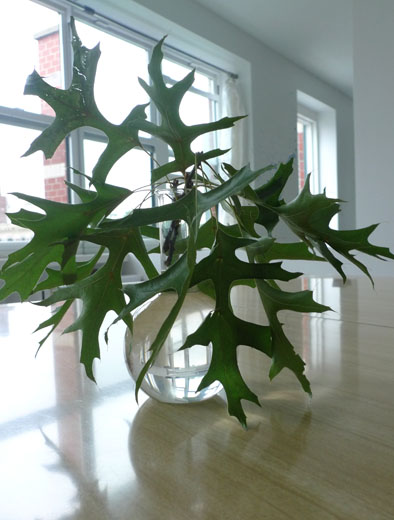 alternative flower arrangementa branch of leaves in a pretty vase