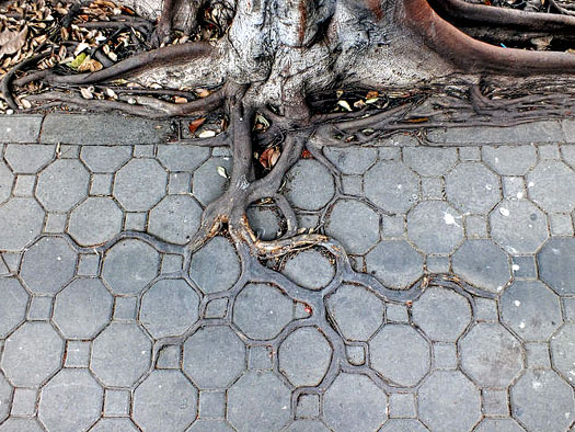 tree roots busting through concrete