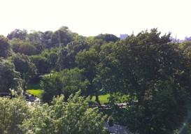 Harlem view