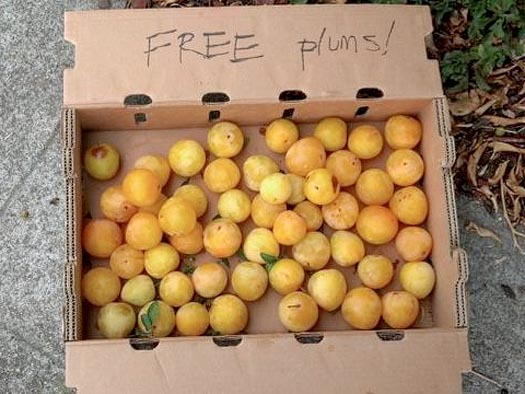 a cardboard box of free plums