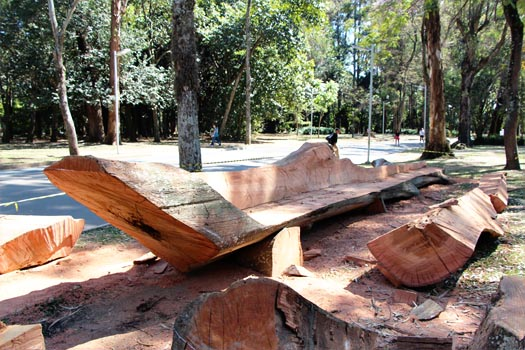 Hugo Franca makes furniture from fallen trees