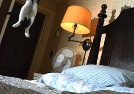 Cat leap