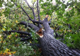 Hurrican Sandy tree destruction