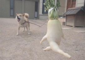 Japanese turnip looks like it's running from vicious attack dog