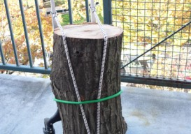 tree on hand truck 1