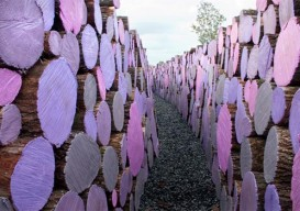 """""""Wake"""" is an art installation of brightly colored cut logs by Michael McGillis"""