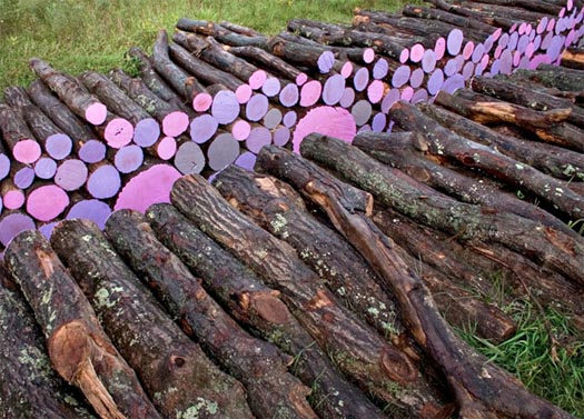 """Wake"" is an art installation of brightly colored cut logs by Michael McGillis"