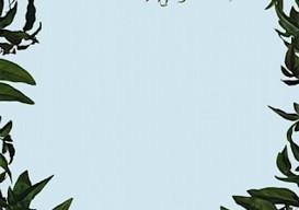 leaf frame/sarah charlesworth