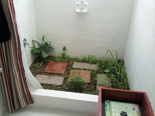 garden in shower