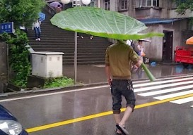 giant leaf umbrella