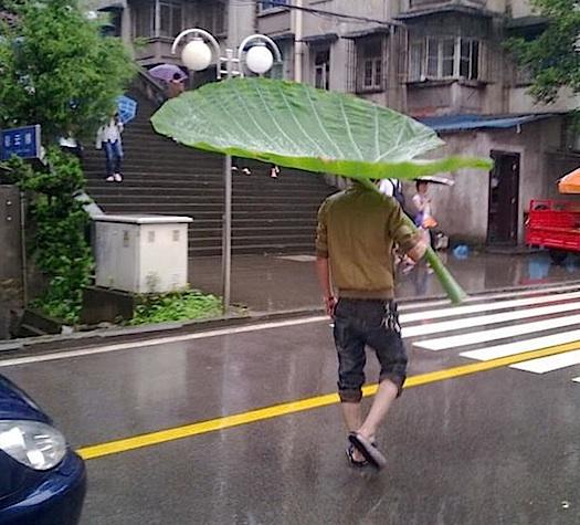 giant leaf umbrella