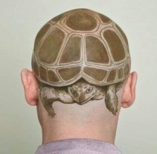 turtle hair cut