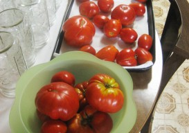 Lucia's tomatoes for canning