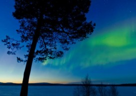 nature walk: aurora borealis