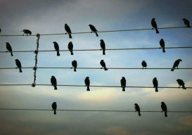 the adjacent possible: birds as musical notes…
