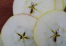 top cut apple star pattern