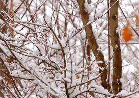 birdsong fm