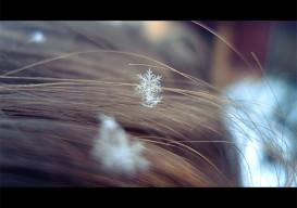 fractals snowflake via blog.oup.com copy