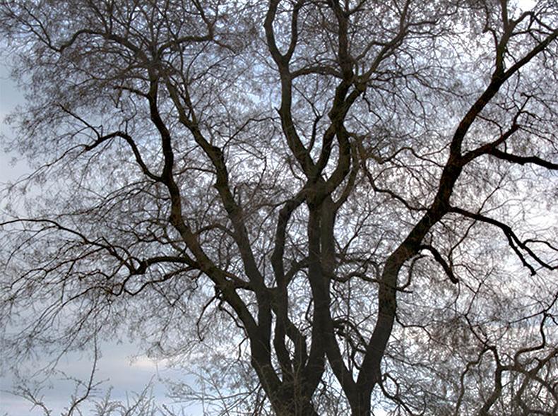 Photo by Petteri Sulonen. Creative commons via PrimeJunta Flickr
