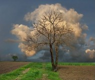 tree_cloud okarola photobucket