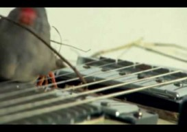 Birds Rock Out on Electric Guitars