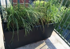 *Sally Patio New Grasses Planter