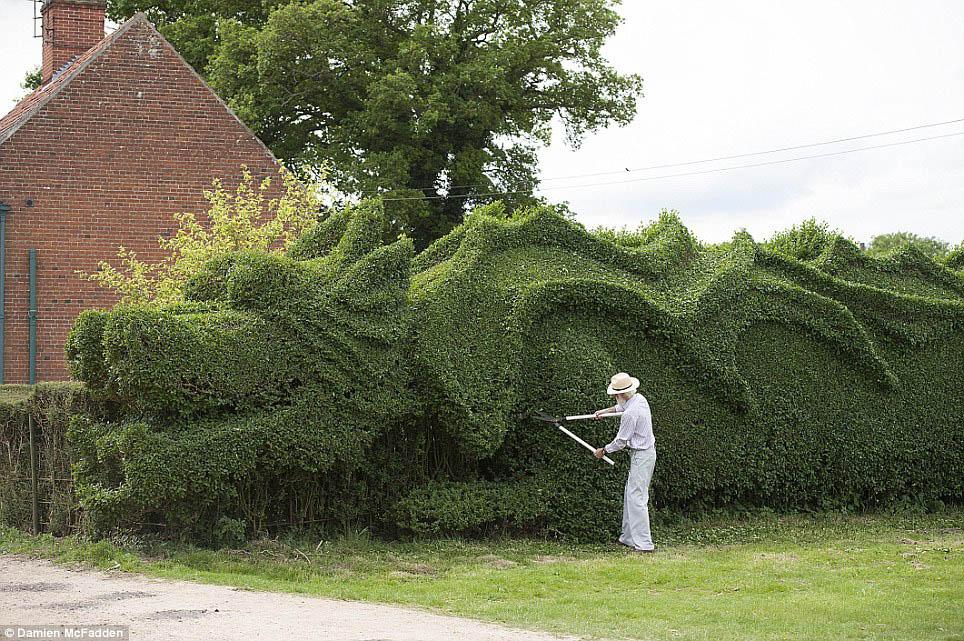 Dragon Hedge  2 Damien McFadden