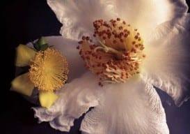 flower 1 1000 px