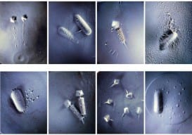 Thomas Ashcraft: Studies on Themes of Bacteria and Baceriophages
