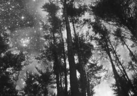 Tree in Stars/Jaci Berkopec