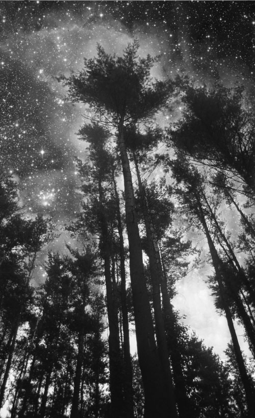 Tree in Stars/Jaci Berkopec