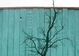 Foliage Graffiti 8