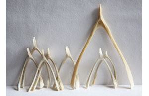 wishbones-standing-IMG_9844 275 px