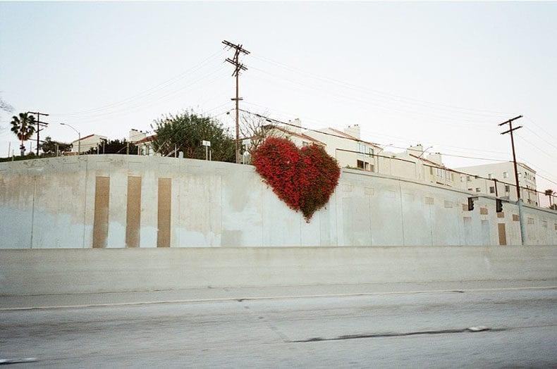 heart of flowers LA Corinne Carrey